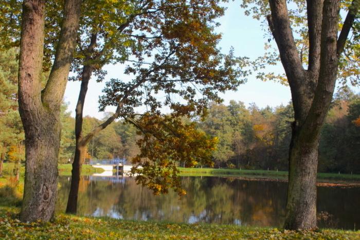 widok na staw w parku w Dzierżąznej