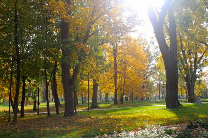 widok na park w Dzierżąznej