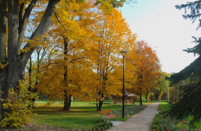 widok na alejkę w parku w Dzierżąznej