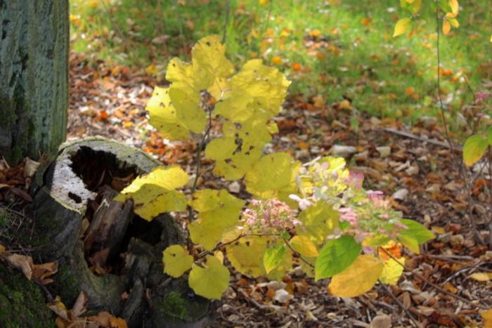 młode drzewa w parku