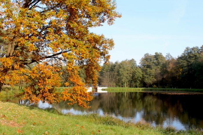 park w Dzierżąznej