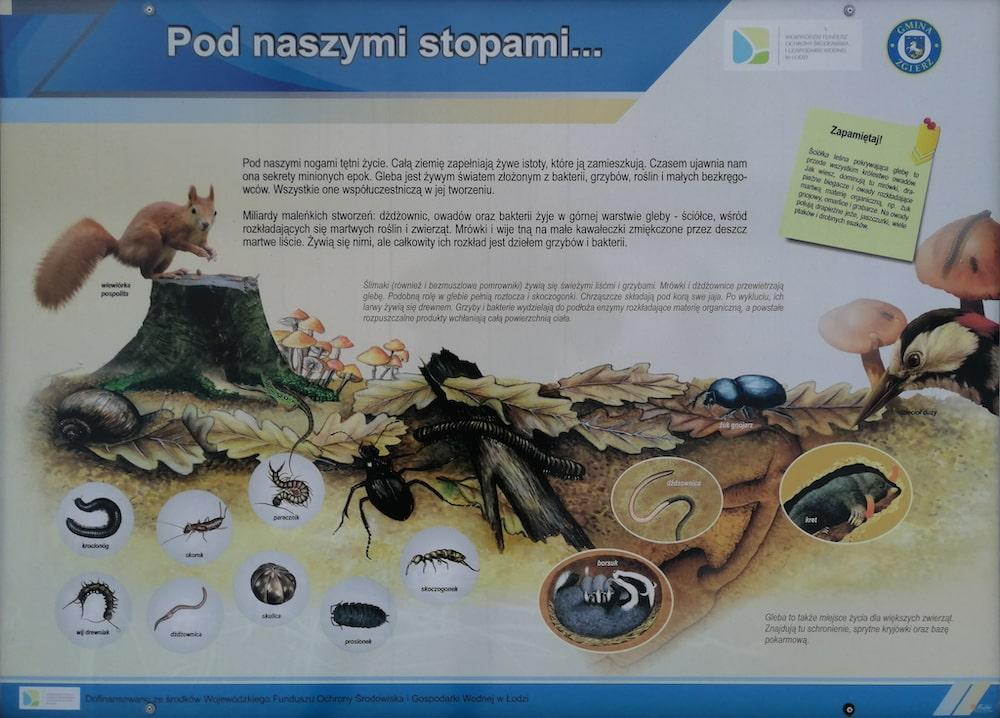 tablice edukacyjne, edukacja przyrodnicza w Dzierżąznej