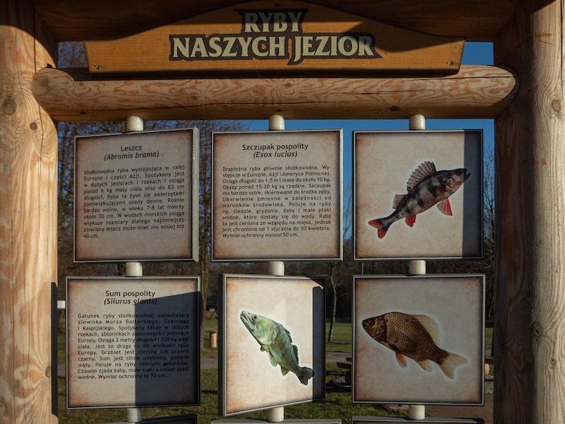 Zgaduj zgadula, elementy edukacyjne, edukacja przyrodnicza w Dzierżąznej