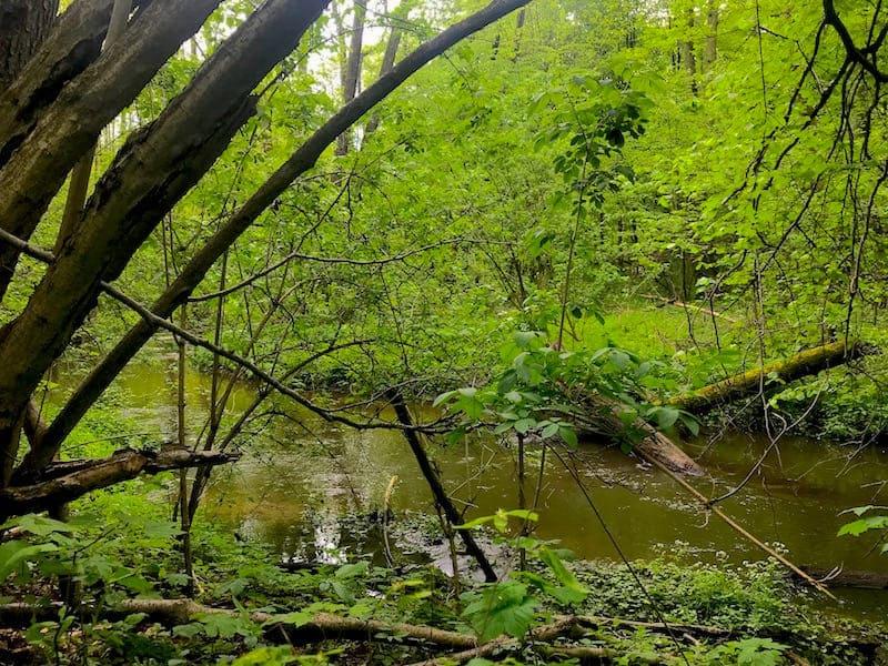Rezerwat Grądy nad Moszczenicą, gmina Zgierz